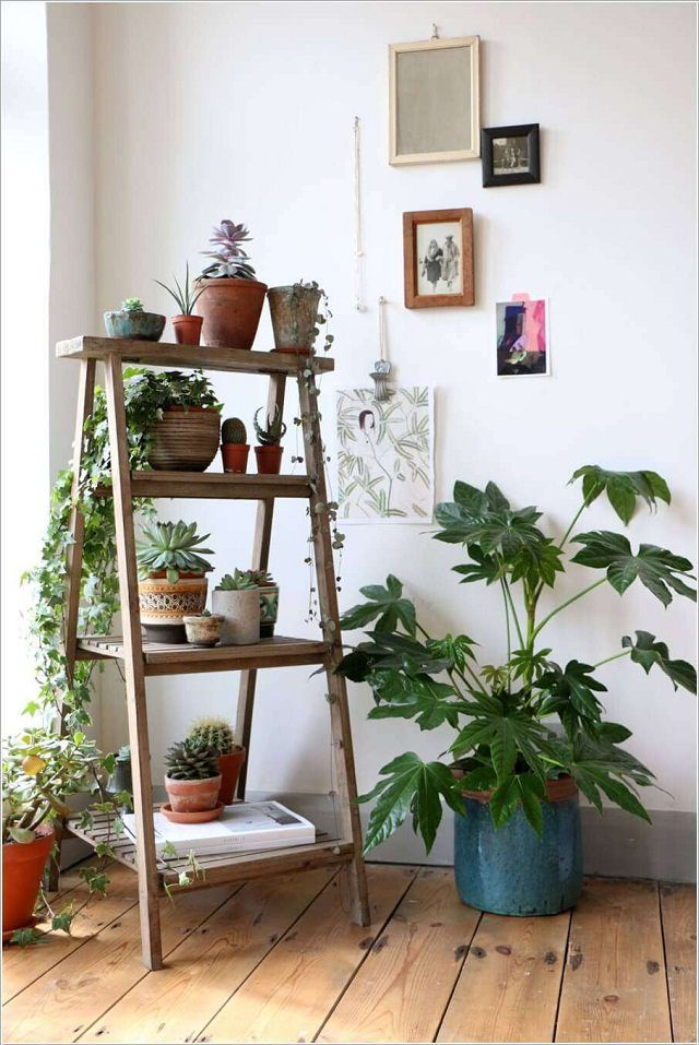 ladder-planter